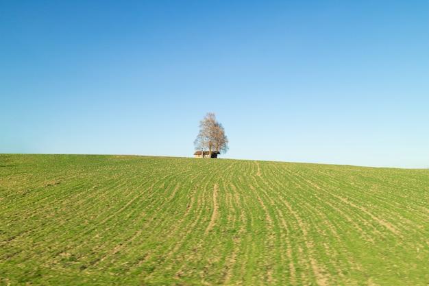 Creatieve landelijke landschap met alleen boom en houten huis op een groene velden onder schone blauwe hemel in een lentetijd, oostenrijk.