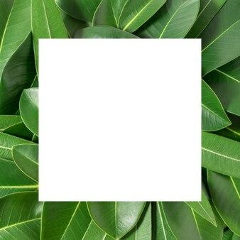 Creatieve lay-out gemaakt van bladeren met papieren kaartnota