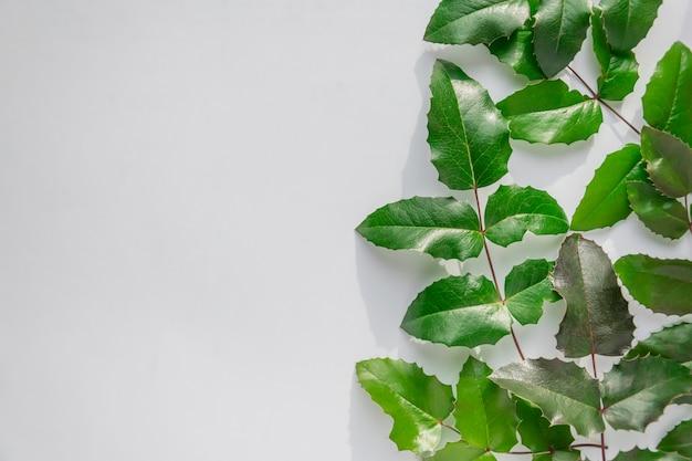 Creatieve lay-out gemaakt van close-up groene bladeren met kopie ruimte