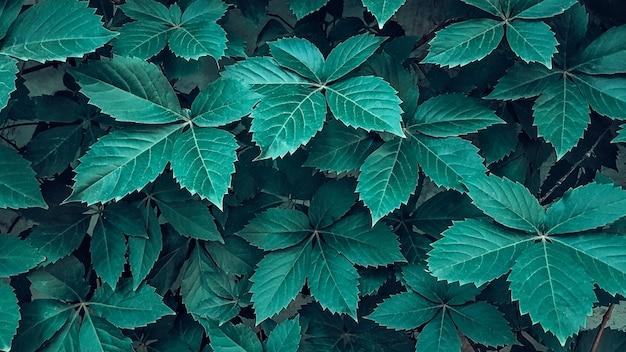 Creatieve lay-out gemaakt van groene bladeren. plat leggen. natuur achtergrond donker en groen