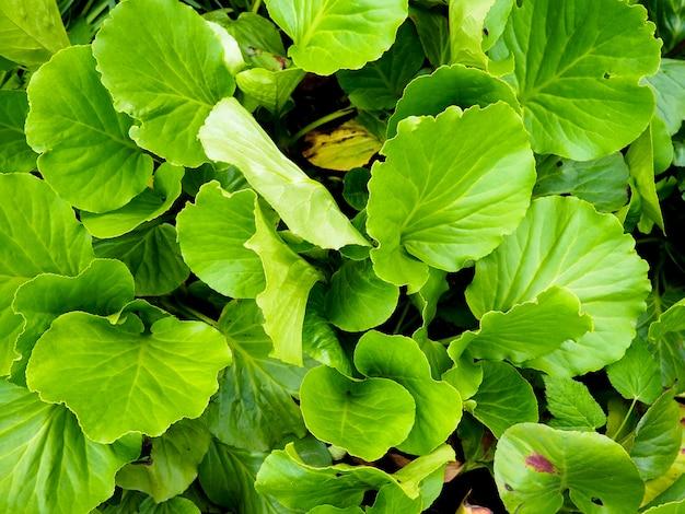 Creatieve lay-out gemaakt van groene bladeren. plat leggen. natuur achtergrond