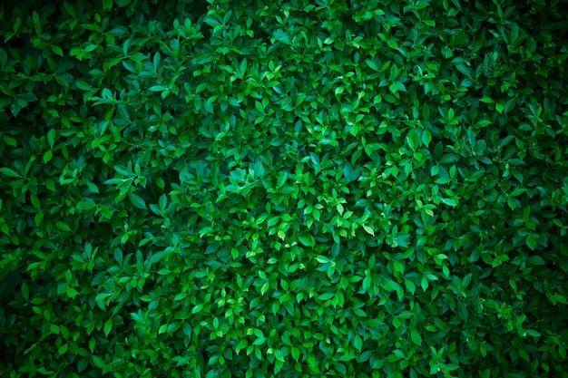 Creatieve lay-out gemaakt van groene bladeren. plat leggen. natuur concept
