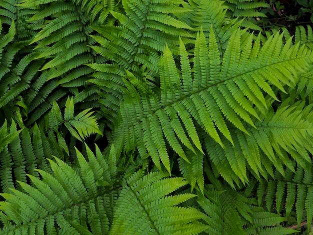 Creatieve lay-out gemaakt van groene bladeren. varen, varens
