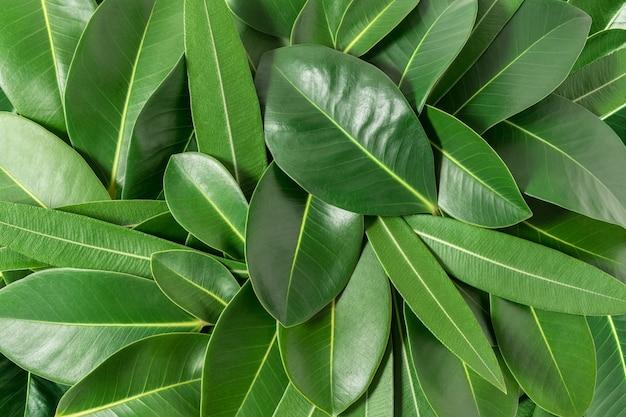 Creatieve lay-out gemaakt van groene bladeren
