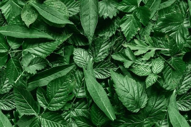 Creatieve lay-out gemaakt van groene bladeren.