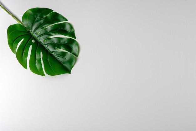 Creatieve lay-out gemaakt van groene tropische bladeren op witte achtergrond.
