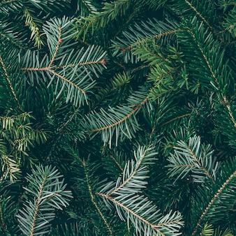 Creatieve lay-out gemaakt van kerstboomtakken. plat leggen. natuur nieuwjaar concept.
