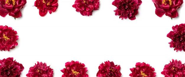Creatieve lay-out gemaakt van rode pioenroos bloemen op wit
