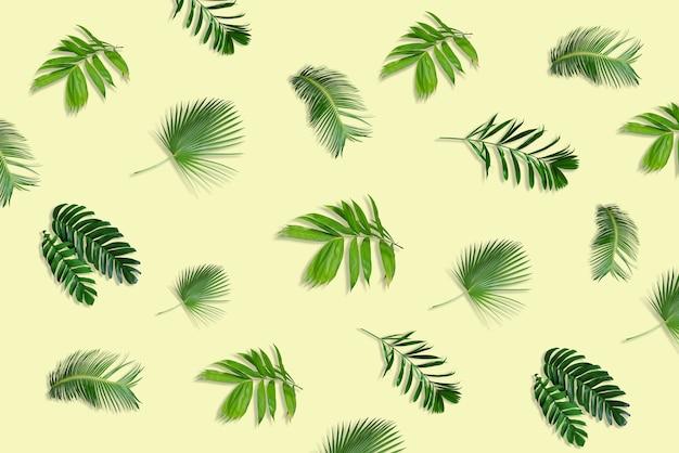Creatieve lay-out gemaakt van tropische monsterabladeren op pastelachtergrond minimale zomer exotisch concept