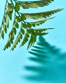 Creatieve lay-out van een groene tak van een varen op een blauw met weerspiegeling van de schaduwen en kopieer ruimte voor tekst. bovenaanzicht