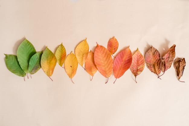 Creatieve lay-out van kleurrijke herfstbladeren. plat leggen. seizoen.