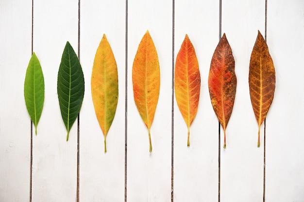 Creatieve lay-out van kleurrijke herfstbladeren. plat op witte houten achtergrond.