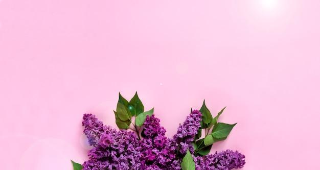 Creatieve minimalistische banner met lila bloemen op trendy roze achtergrond. webbanner. bovenaanzicht, plat lag, kopieer ruimte.