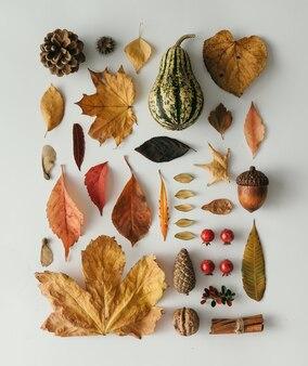 Creatieve natuurlijke lay-out gemaakt van herfstflora. netjes georganiseerd. plat leggen.