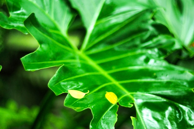 Creatieve tropische groene bladerenlay-out. natuur lente concept achtergrond
