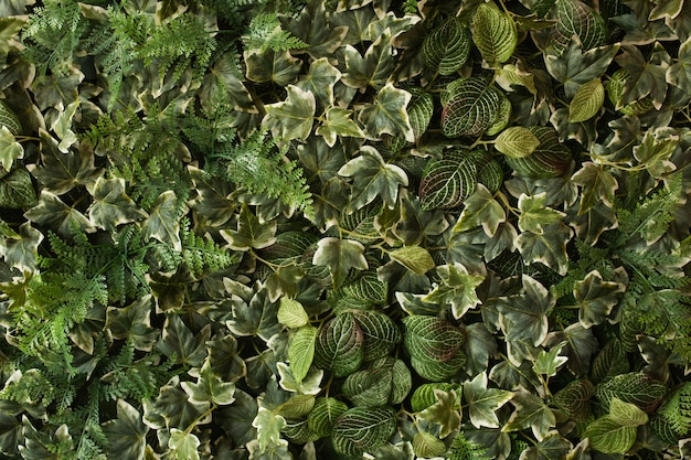 Creatieve tropische groene bladerenlay-out. natuur lente concept. plat leggen.