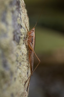Cricket opknoping op een boomstam