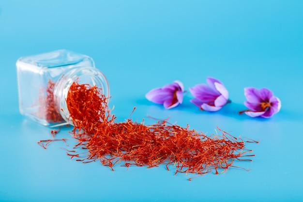 Crocus bloem en gedroogde kruiden saffraan meeldraden op blauwe achtergrond.