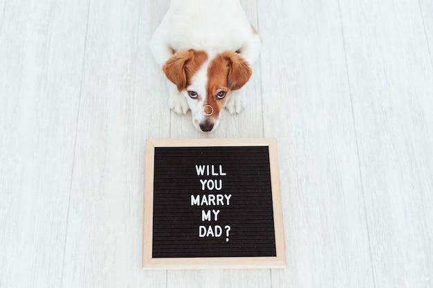 Cte hond met een wieden ring op zijn snuit. bruiloft concept
