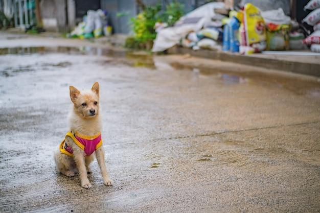Cutiehond in etong-dorp bij kanchanaburi-stad thailand. pilokmijn, the old mine nabij de grens tussen thailand en myanmar