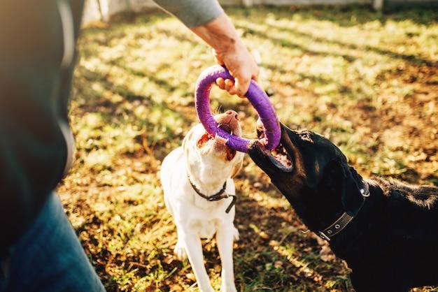 Cynologist werkt buiten met militaire honden
