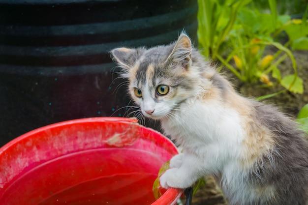 Cyperse kat in de tuin