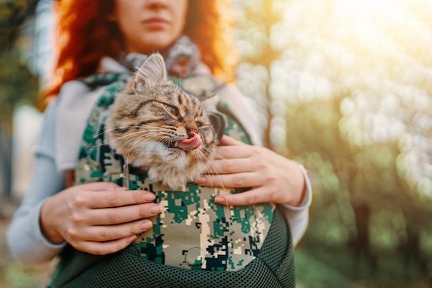 Cyperse kat in een tas.