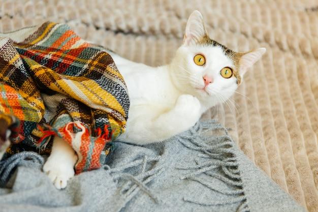 Cyperse kat ligt op een geruite, schattige kat