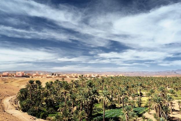 Dadelpalmen in oase in de sahara-woestijn