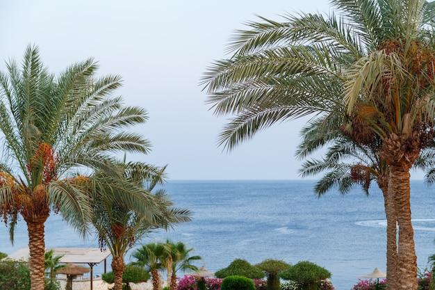 Dadelpalmen staan op de achtergrond van de blauwe zee.