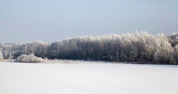 Dag in de winter