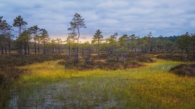 Dageraad in het moeras, herfstochtend
