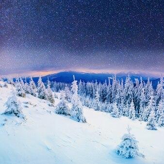 Dairy star trek in de winter