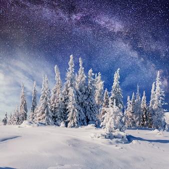 Dairy star trek in het winterbos. karpaten, oekraïne, europa
