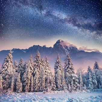 Dairy star trek in het winterbos. karpaten, oekraïne