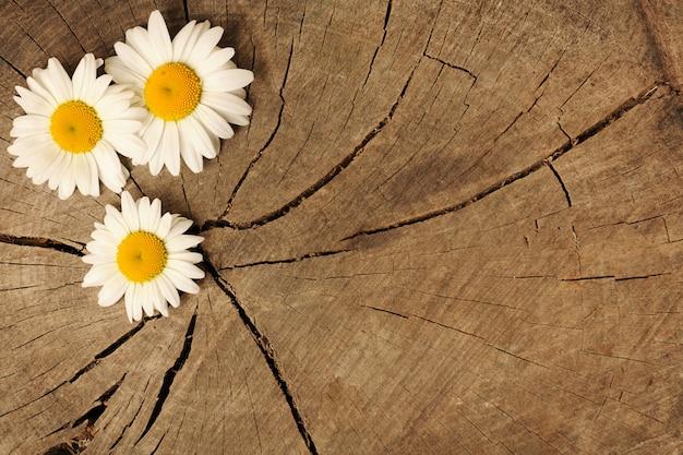 Daisy op houten achtergrond