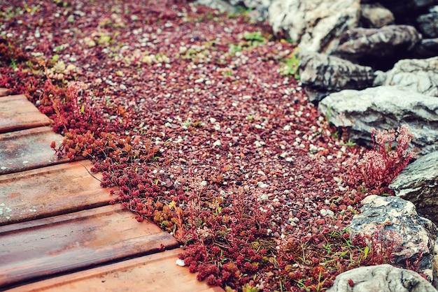 Dak met sedum. milieuvriendelijk gebouw. groen ecologisch zodendak op houten gebouw. dak bedekt met vegetatie meestal sedum sexangulare.