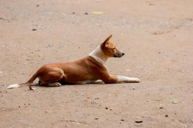 Dakloze en hongerige hond