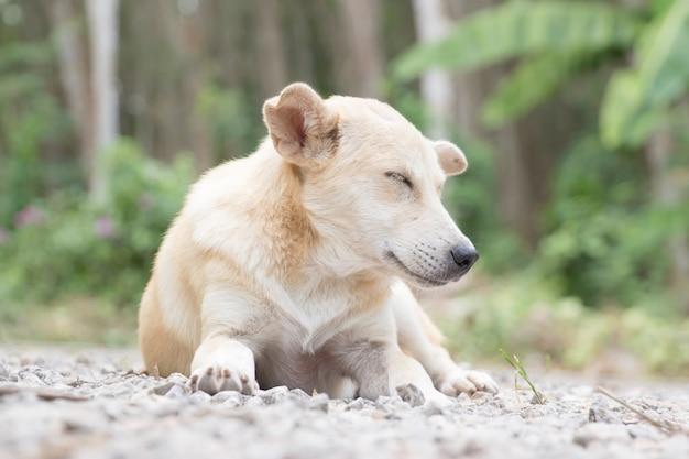 Dakloze en hongerige kleine hond die in de tuin wordt verlaten