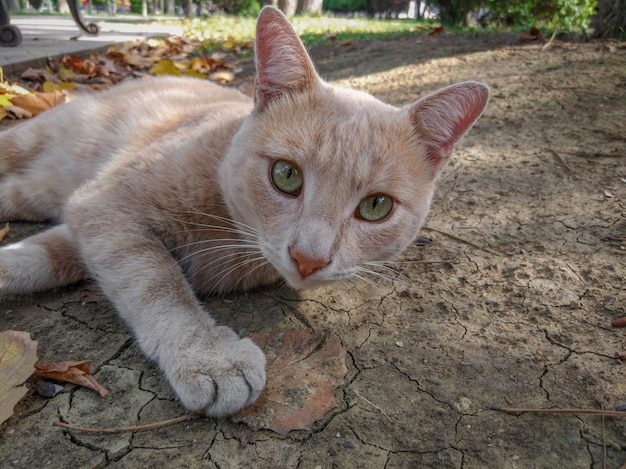 Dakloze gember mooie kat, close-up