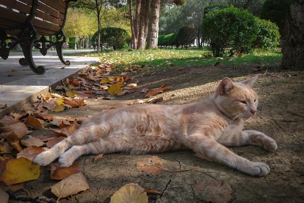 Dakloze gember mooie kat in park