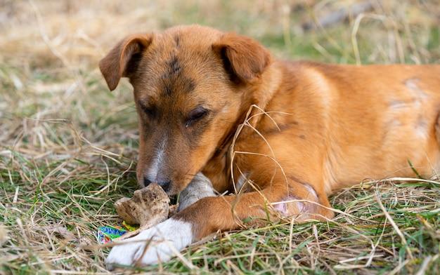 Dakloze hond die een been in de straat eet