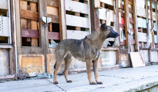 Dakloze hond in de buurt van een verlaten gebouw