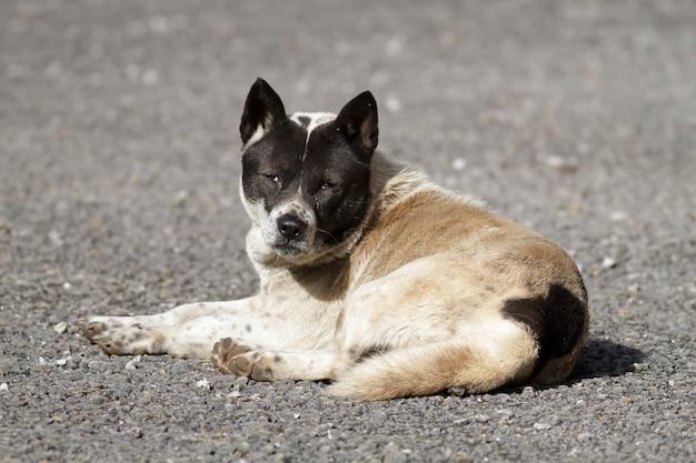 Dakloze hond (kijk uit hond)
