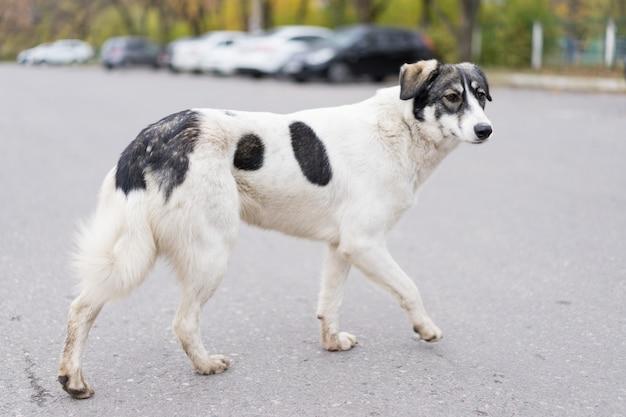 Dakloze hond loopt langs de weg.