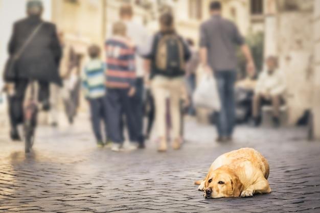 Dakloze hond met droevig oog die op een bestrating liggen, voorbijgaande mensen