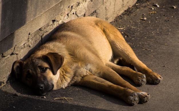 Dakloze hond met droevige ogen