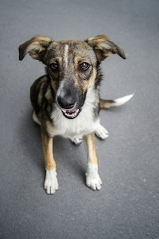 Dakloze hond portret