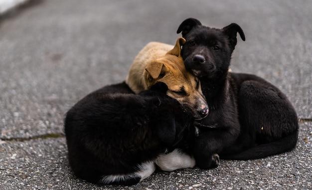 Dakloze honden koesteren zich op straat tegen de kou