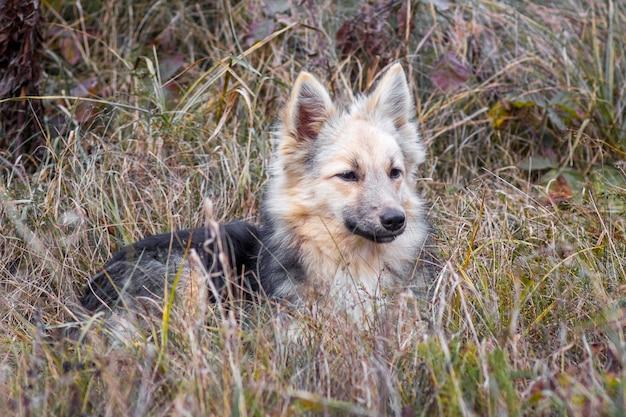 Dakloze jonge wilde hond in struikgewas van gras